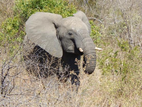 Kruger Flexi Tours - Day Tours: Several elephants crossed the road in front of our vehicle