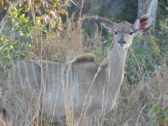 Kruger Flexi Tours - Day Tours: about 20 feet from our vehicle