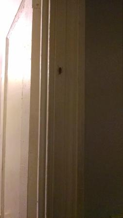 Hotel 309: Roaches!!!