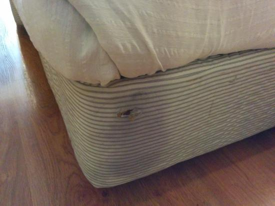 Hotel Aurora Towers: Torn Matress and stained bedsheet