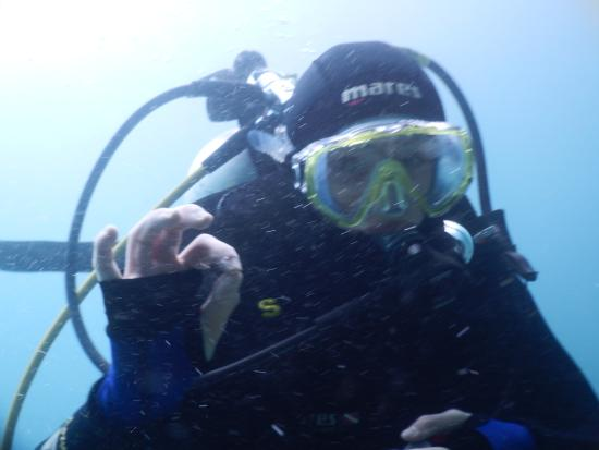 Tairua Dive and Marine: under water