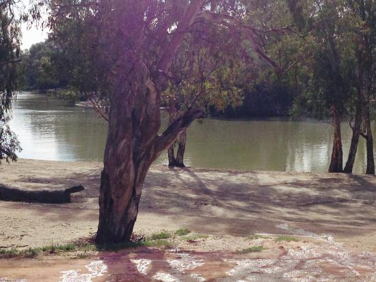 Loxton Riverfront Holiday Park: View from executive cabin