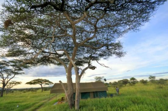 Ang'ata Camp Serengeti : My tent!