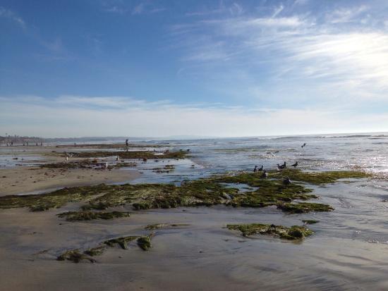 Swami's Beach: Low tide in January.