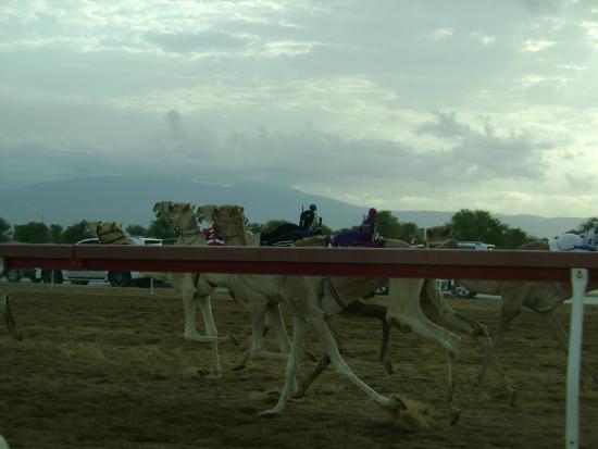 Al Sawan Camel Track : Лидеры забега