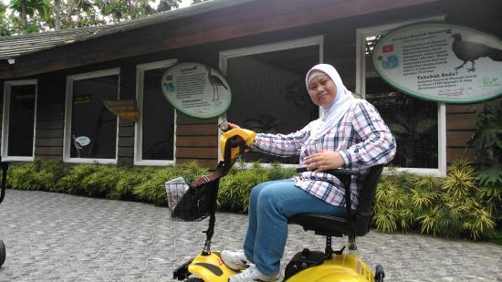 Batu Eco Green Park Fun & Study: Istri pakai sepeda elektrik ....tekan tuas ke depan untuk maju...