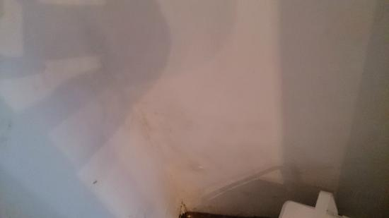 L'Auberge Provencale : The inside of the closet, more mould.....