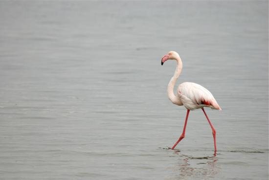 Swakopmund Guesthouse: Nearby flamingo colony
