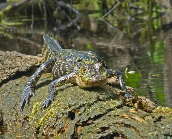 Louisiana Lost Lands Environmental Tours