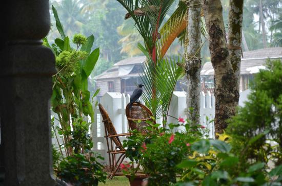 Bamboo Lagoon Backwater Front Resort: Crow menace