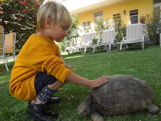 Casa de Avila - For Travellers : Nuestro hijo jugando con la tortuga que vive en el hotel.