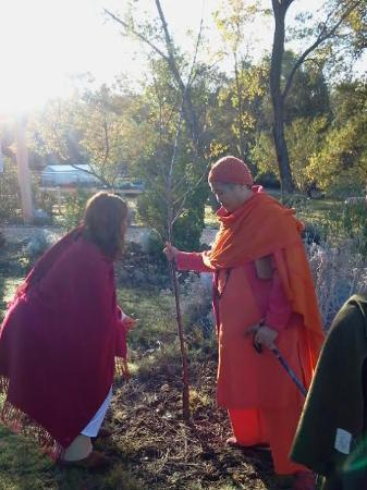 Sivananda Ashram Yoga Farm: Early morning in the orchard with Swami Sita