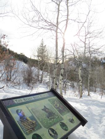 Fish Creek Falls : Gorgeous winter day-- easy hike