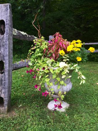Grafton, VT: Flowers near wedding site. Stream runs peacefully nearby.