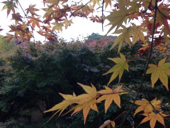 Yujaku Park : もみじが美しかった。