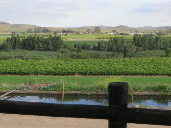 Weltevrede Jonkers Family Wine Farm: The view