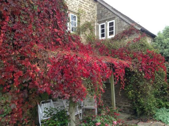 Broadgrove House: Virginia creeper on the house