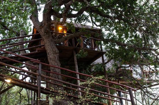 Pezulu Tree House Game Lodge: Honeymoon Treehouse