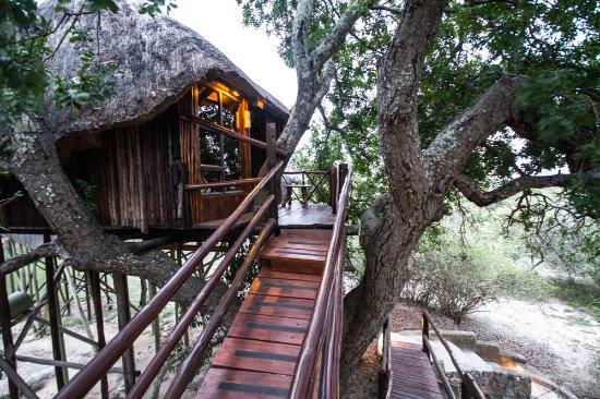 Pezulu Tree House Game Lodge: Treehouse