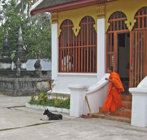 Vat Visounarath : A monk and a temple dog