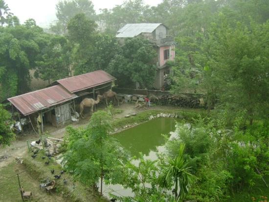 Hotel Monalisa Chitwan: Отель Монализа - вид из номера на 4-м этаже