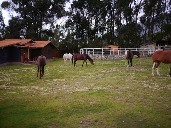 The Lazy Dog Inn: Horses on grounds