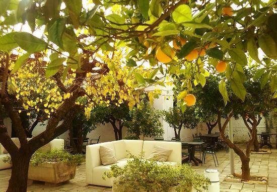 Il nostro giardino foto di l 39 agrumeto andria tripadvisor - Il giardino di mezzanotte ...