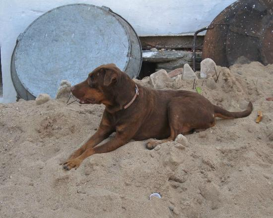 Devra Udaipur: Rupert the resident dog