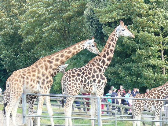 Fota Wildlife Park: zoo2