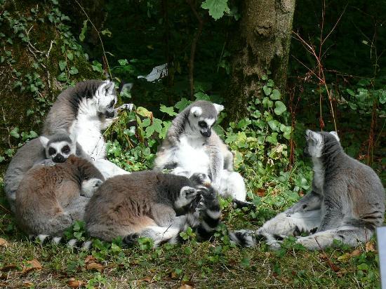 Fota Wildlife Park: zoo1