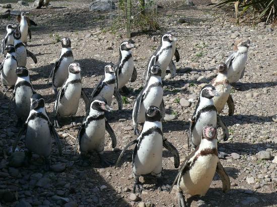 Fota Wildlife Park: zoo3