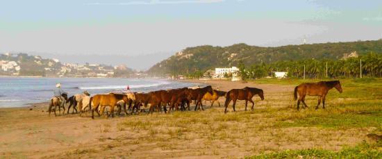 Stone Island (Isla de las Piedras): Cowboy and horses in the morning