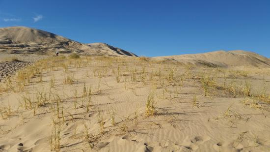 Fairfield Inn & Suites Twentynine Palms - Joshua Tree National Park: Kelso Dunes in Mojave Preserve