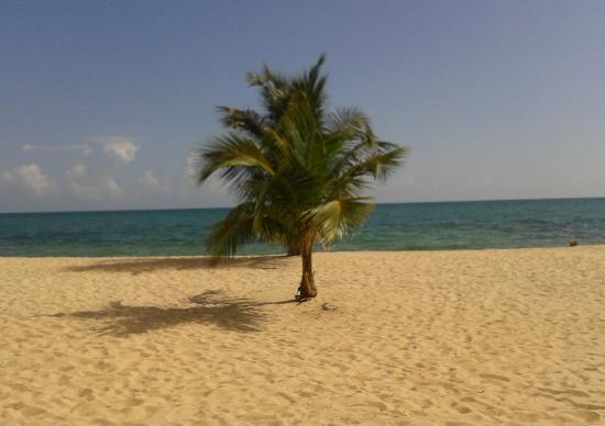 De Tatch : De palm tree