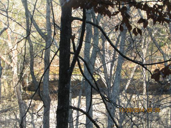 Rim Rock Recreational Area: ledge of a rock deep behind the trees