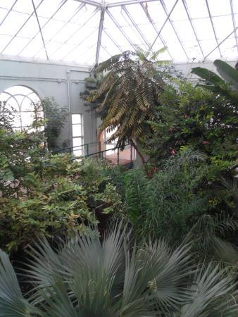 Jardin Botanico de Cordoba: Вид сверху на деревья в оранжерее