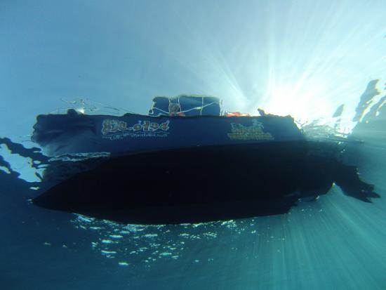 Cayman Turtle Divers: great viz