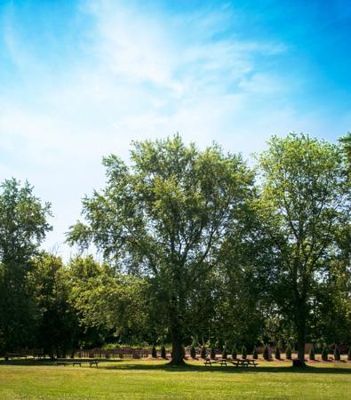 Vine Ridge Resort : Grounds