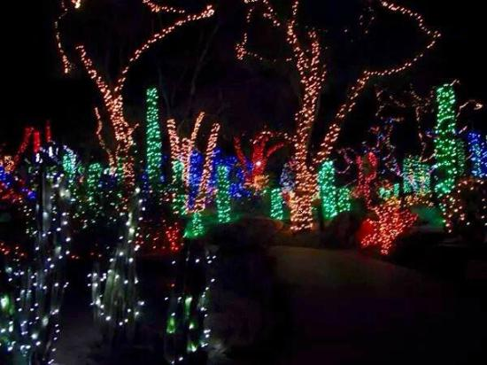 Holiday Lights At The Cactus Garden Picture Of Ethel M Chocolates Factory And Cactus Garden