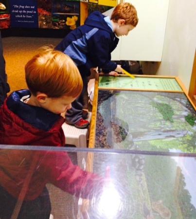 Denison Pequotsepos Nature Center: Connor & Avery enjoying watching the turtles
