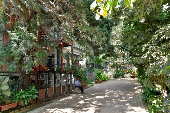 Laika Boutique Stay : Hotel to Left on tree lined street