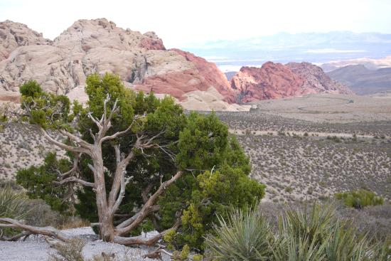 steps along calico tank trail picture of red rock canyon national conservation area las vegas. Black Bedroom Furniture Sets. Home Design Ideas