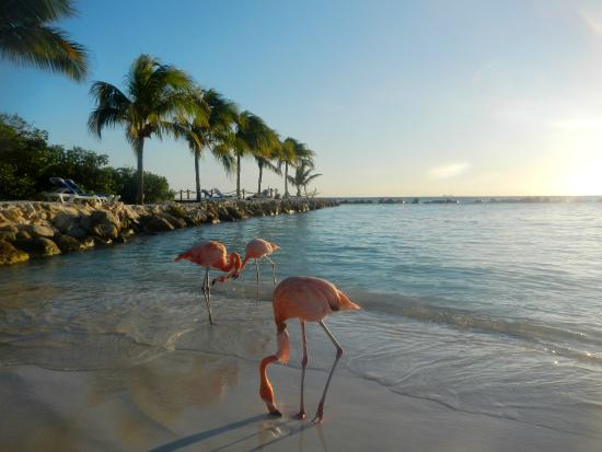 Renaissance Aruba Resort Flamengo Beach