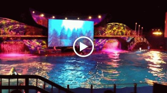 Part of Shamu's Christmas Miracle Show - Picture of SeaWorld ...