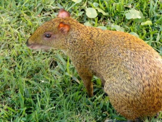 The Top 10 Things to Do Near Grand Bahia Principe Tulum ... |Grand Bahia Principe Tulum Animals