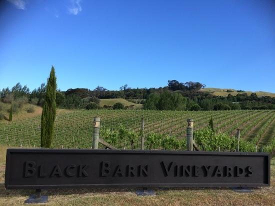 Takaro Trails Cycle Tours - Day Tours: The many vineyards along the trail are an absolute highlight.