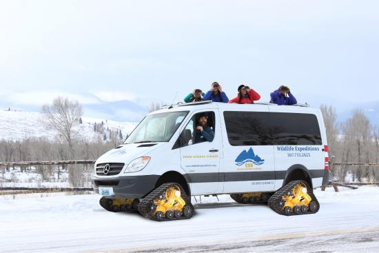 Wildlife Expeditions of Teton Science Schools: Our luxury snowcoaches are used on our Yellowstone Winter Expeditions.