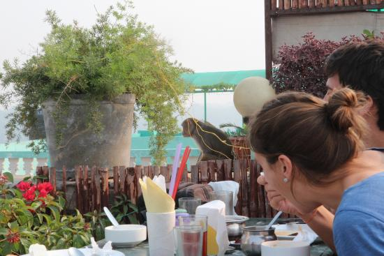 Saniya Palace Restaurant: Monkey view