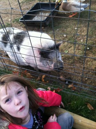 Animal Adventures: farm animals