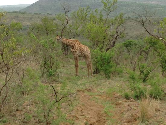 Garden Court Umhlanga: We did a Safari from hotel